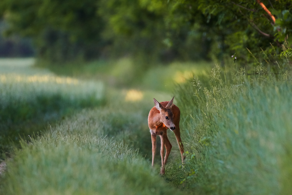Poloniny 3. Foto: Shutterstock