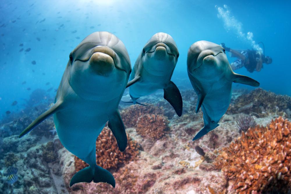 Morské živočíchy. Foto: Shutterstock