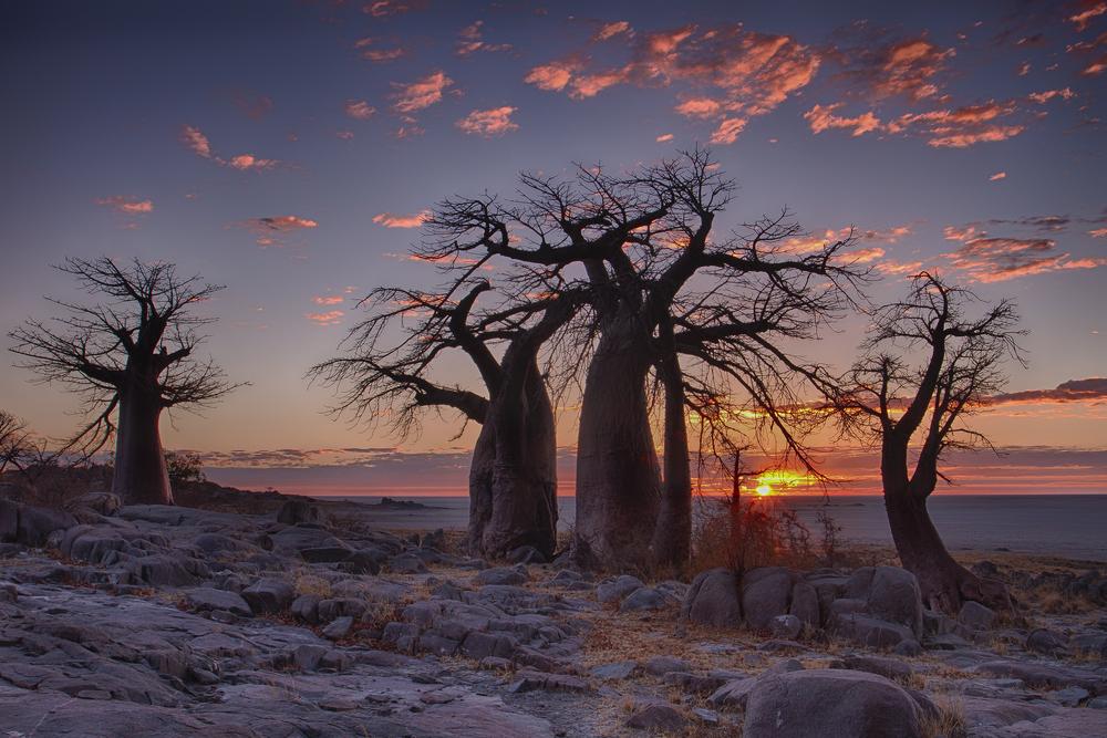 Afrika. Foto: Shutterstock