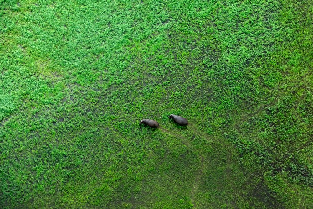 Delta Okavanga Afrika. Foto: Shutterstock