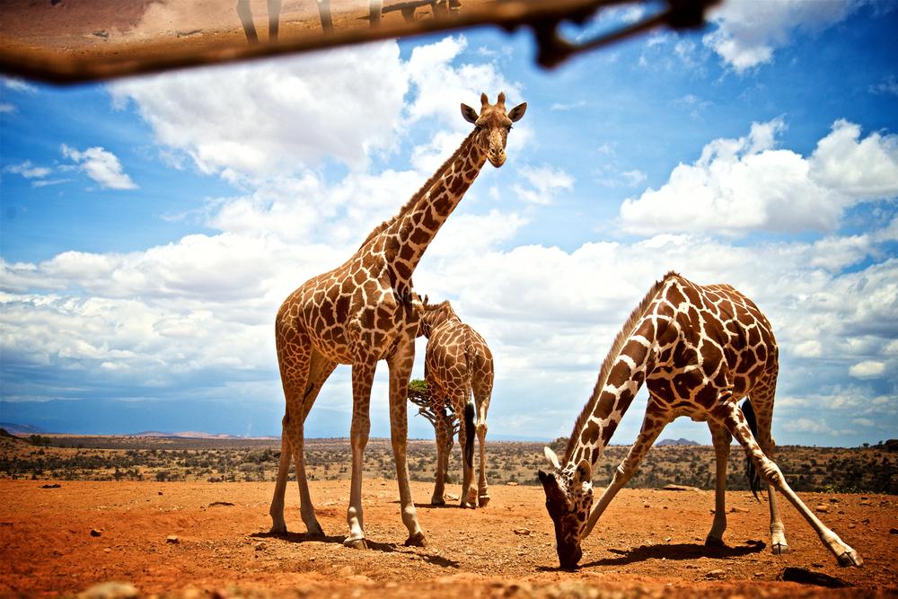 Keňa, Afrika. Foto: Shutterstock
